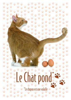 CP LE CHAT POND 2015
