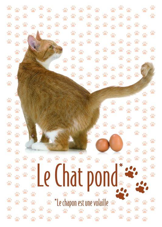 CP LE CHAT POND 2015